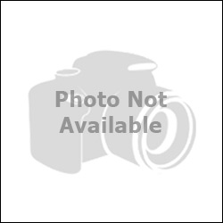 Blackwhitedragon's Fursona Avatar